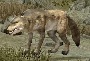 Malnourished Wolf.png